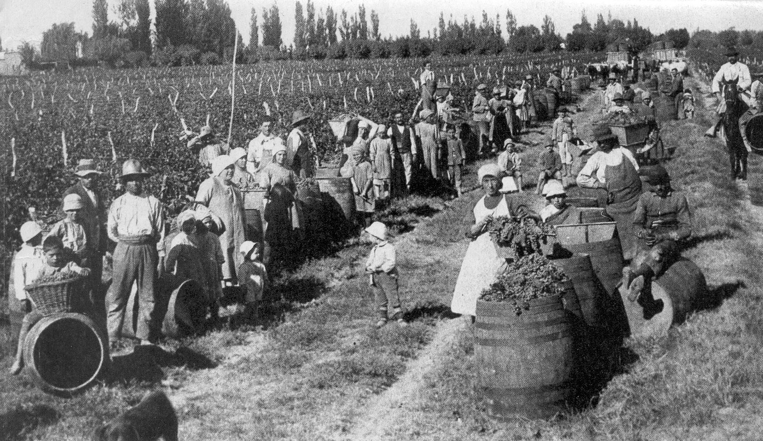 Inmigrantes-cosecha-de-uva